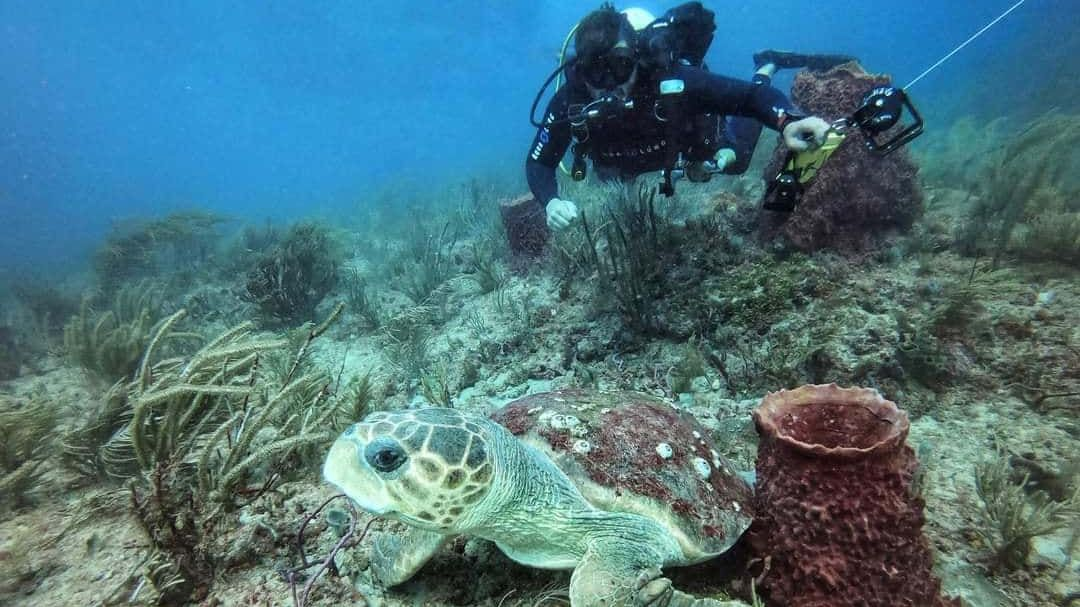 diver on 40 foot reef with turtle