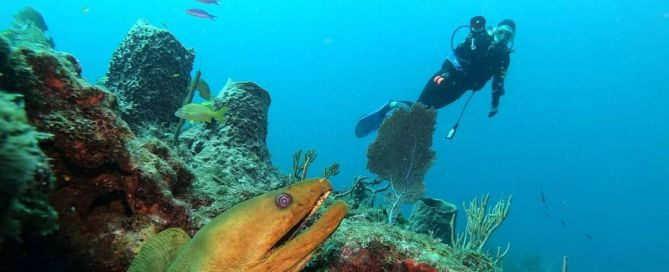 60'-reef-dive-on-the-Diveboat-Diversity