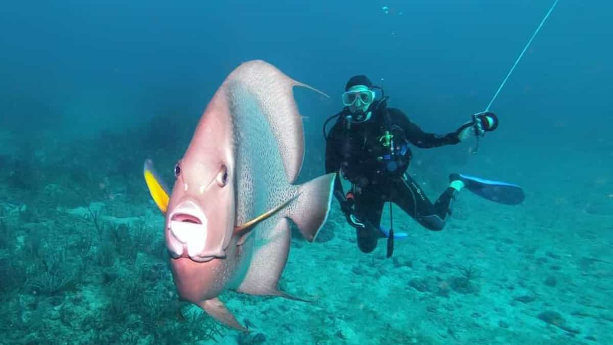 60' reef dive on the Diversity